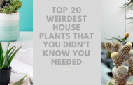 Top 20 Weirdest House Plants that You Didn't Know You Needed