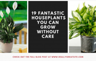 19 Fantastic Houseplants You can Grow Without Care