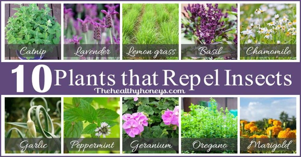 How To Get Rid Of Unwanted insects These 10 Incredible Plants Will Do it