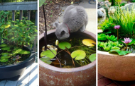 How To make Pond in a Pot: Create a Container Water Garden