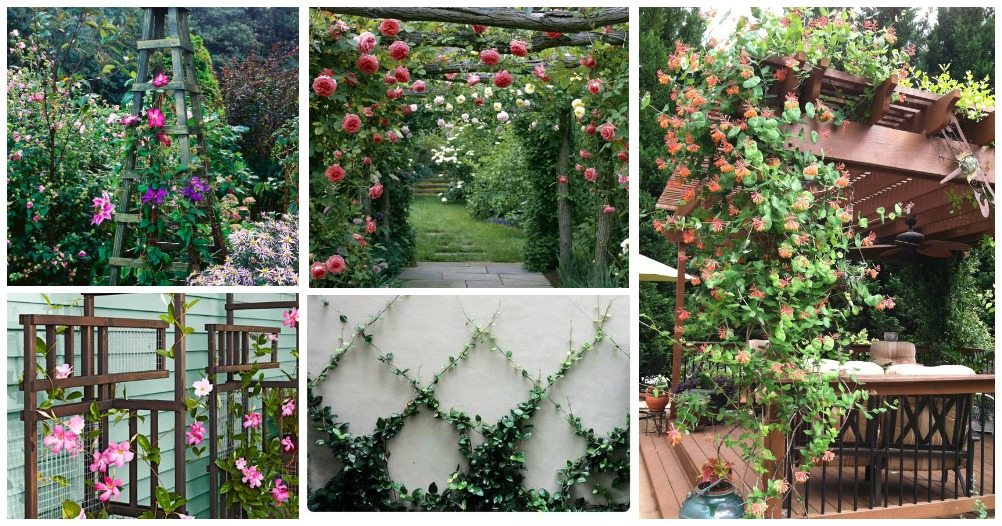 These Amazing Climbing Trees Will Give Your Garden A Wonderful Look
