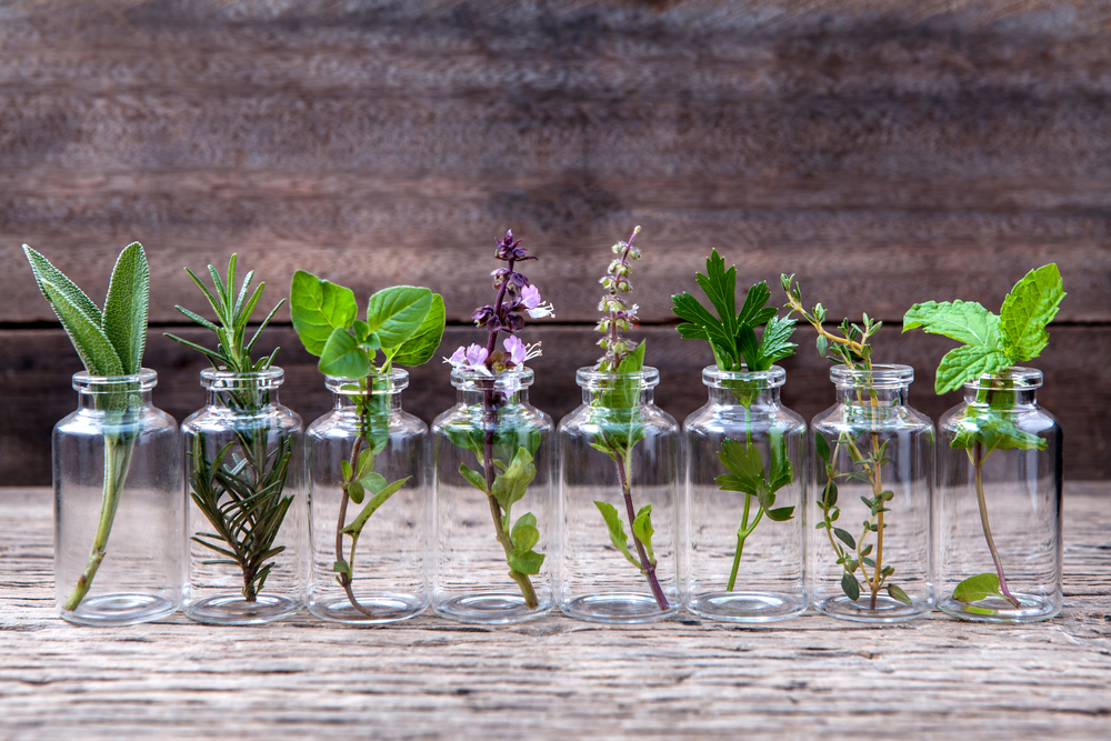 25 Amazing Herbs, Vegetables & Plants You Can Grow In Water