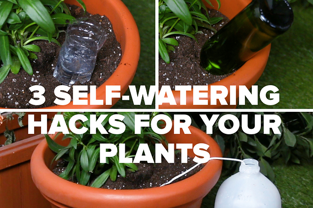 These 3 Insane Self-Watering Hacks Will Keep Your Plants Happy And Hydrated