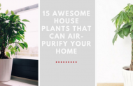 15 Awesome House Plants That Can Air-Purify Your Home