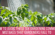 How To Avoid These Six Gardening Common Mistakes That Gardeners Fall to