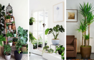 20 superb plants ideas that will beautify your indoor design