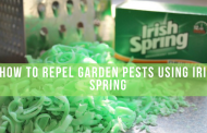 How To Repel Garden Pests Using Irish Spring