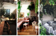 20 most beautiful indoor plants that will make your home look lovely