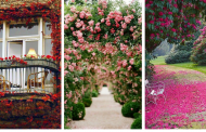 20 wonderful flowers ideas  that beautify your house and garden