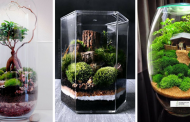 15 Incredible Terrarium That Will Truly Amaze You