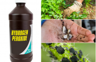 10 Unbelievable Hydrogen Peroxide Uses In Garden You Should Know