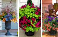 22 Container Garden Pictures will amaze you