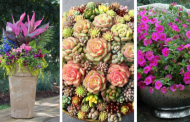 20 Fantastic Container Garden Ideas