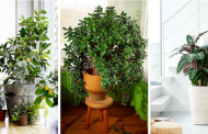 12 Ways You're Killing Your Houseplants