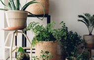 27 best Amazing Indoor Plants images