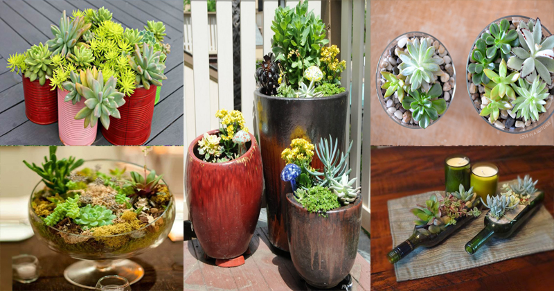 10 Best Indoor and Outdoor Succulent Gardens Ideas