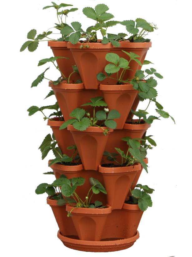 An alluringStrawberry Tower