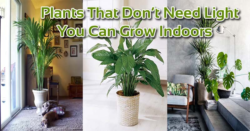 17 Plants That Don't Need Light You Can Grow Indoors