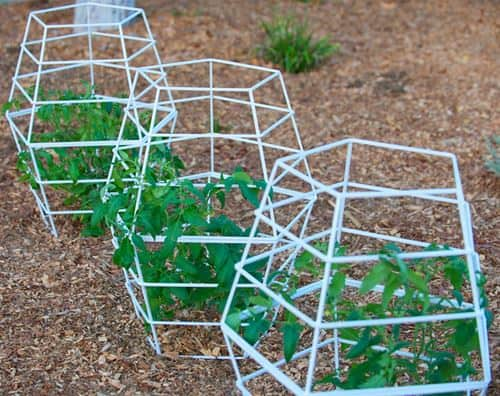 Tomatoes cages