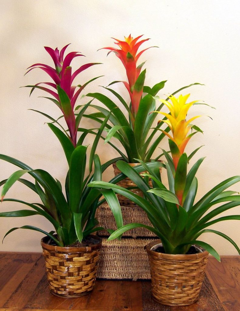 Bromeliads Plants that don't need light