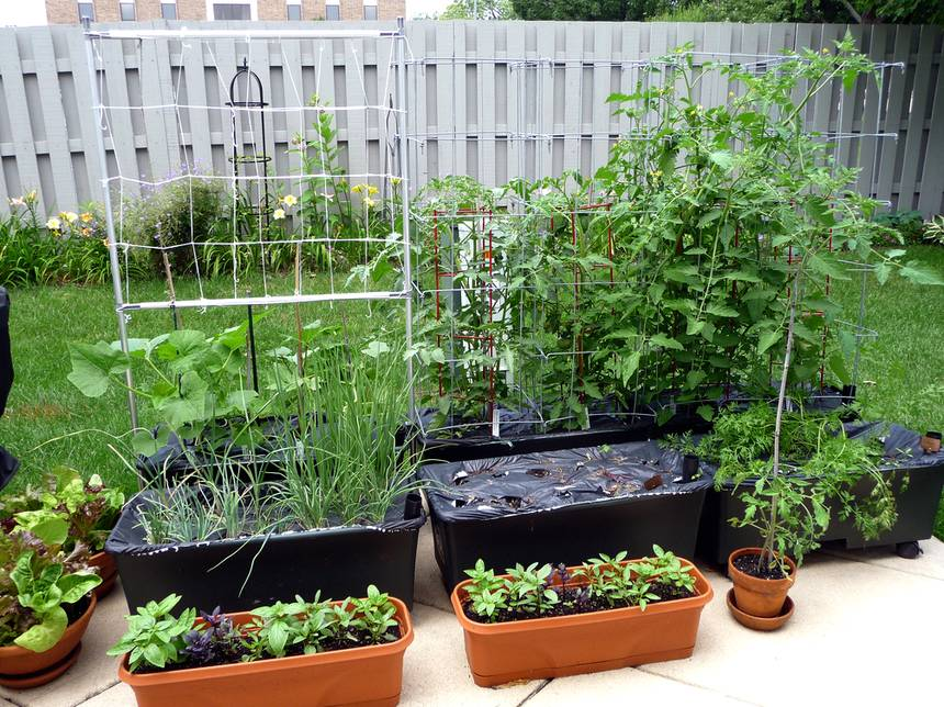 earth boxes tomato self-watering planters
