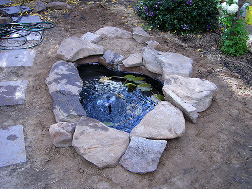 Medium backyard fish pond
