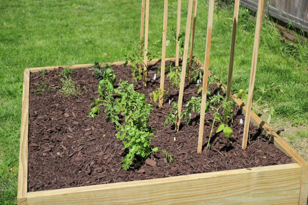 raised bed for tomato