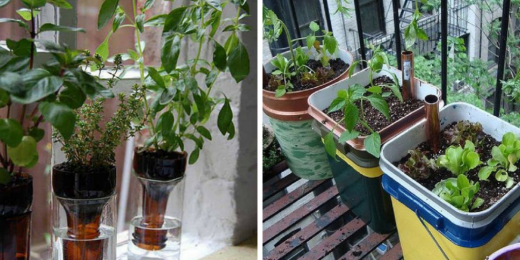 self-watering containers