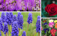 Pleasant Smelling Flowers: the top 20 according to experts.
