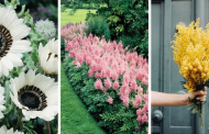 Top Best Garden Flowers That Bloom all Year