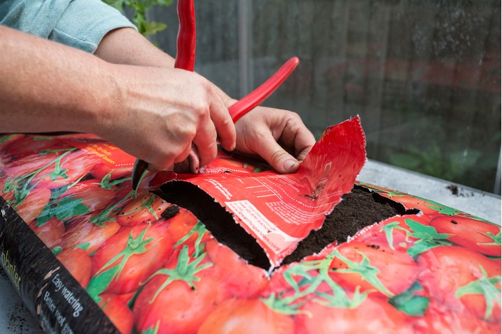 Second step for growing tomatoes in a grow bag