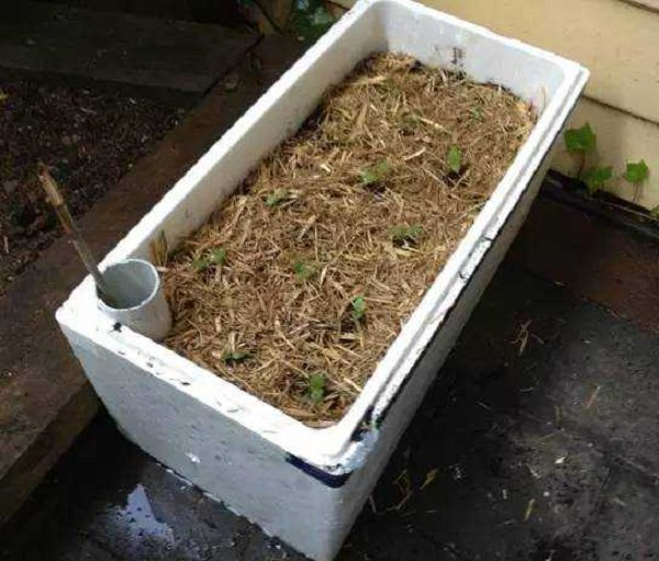 Self Watering Foam Box container