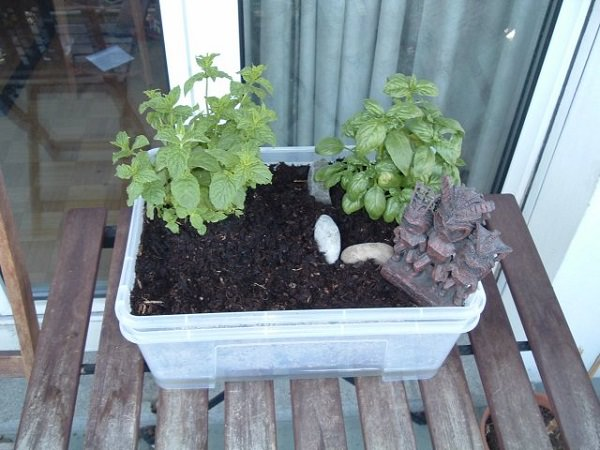 Self-Watering Mini container