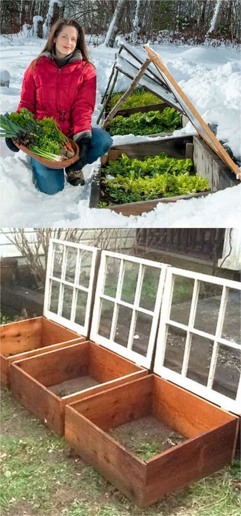 24 Cheap & Easy DIY Greenhouse Designs You Can Build Yourself