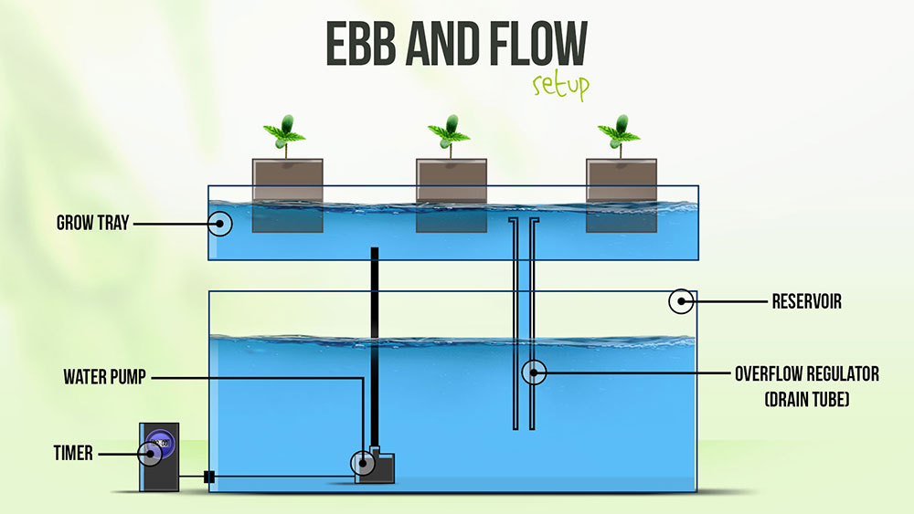 How to grow tomatoes in ebb flow hydroponic system