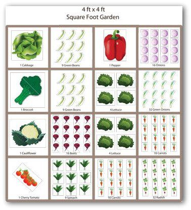 4×4 Foot Square Foot Gardening
