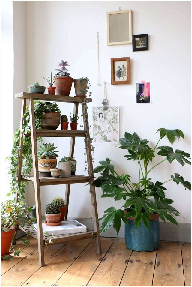 Indoor Ladder Planter