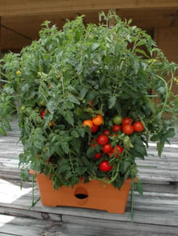 the growbox tomato self-watering planter