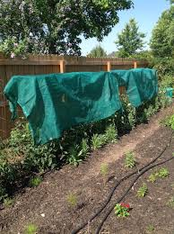 tomato shade cloth