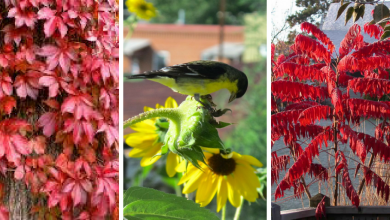 10 Beautiful plants to attract wild birds to your garden