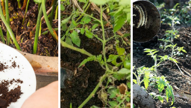 5 convincing reasons why you should use coffee grounds for plants