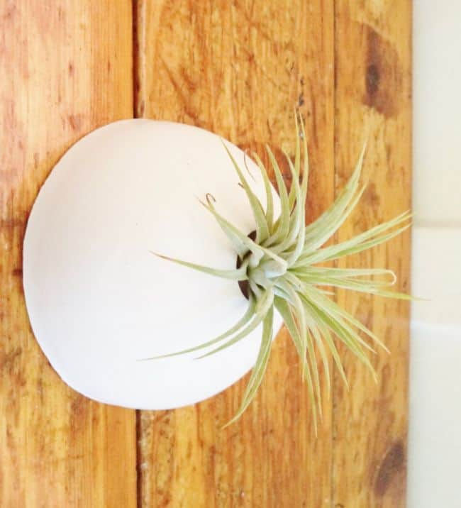 Ceramic Air Plant Holder Display