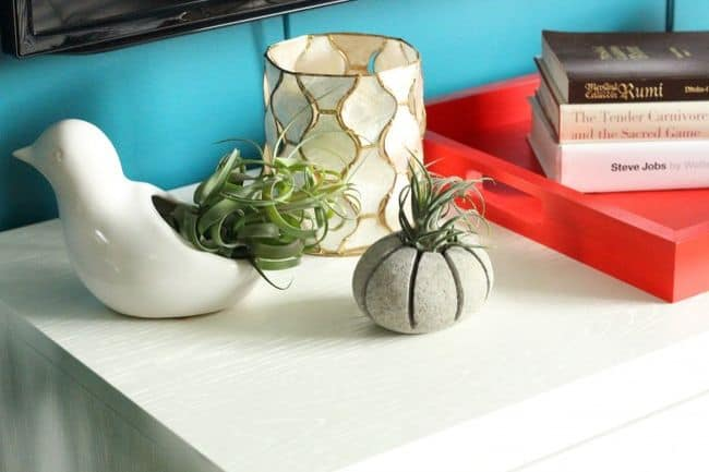 Console Table Display With Air Plants