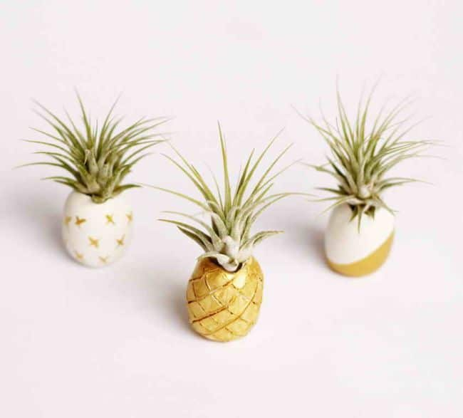 DIY Golden Clay Air Plant Holder
