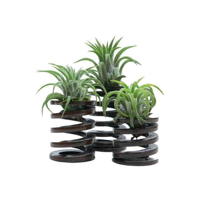 Gorgeous-Air-Plant-Display-In-Industrial-Spirals