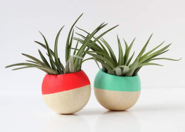 Hand Dipped Air Plant Pots Display