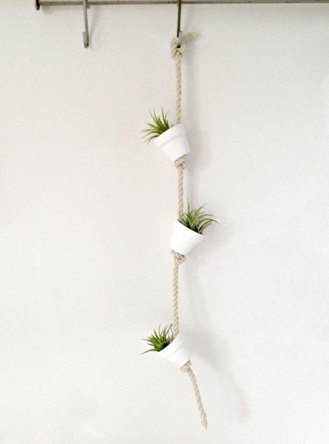 Hanging Air Plants In White Clay Pots
