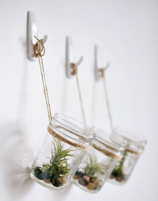 Hanging jars air plants display