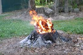 How to Kill a Tree Stump through fire