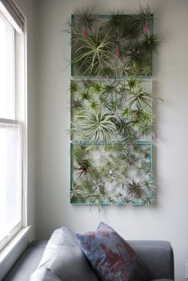 Metal Frame air plant display